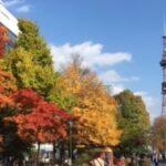 札幌大通公園の紅葉、見頃です!